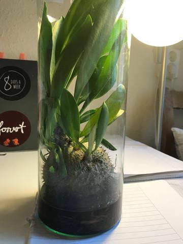 Finde den Namen dieser Pflanze einfach nicht heraus.  - (Pflanzen, pflanzenkunde)