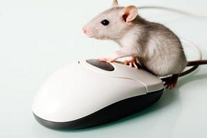 Maus - (Computer, PC, Internet)