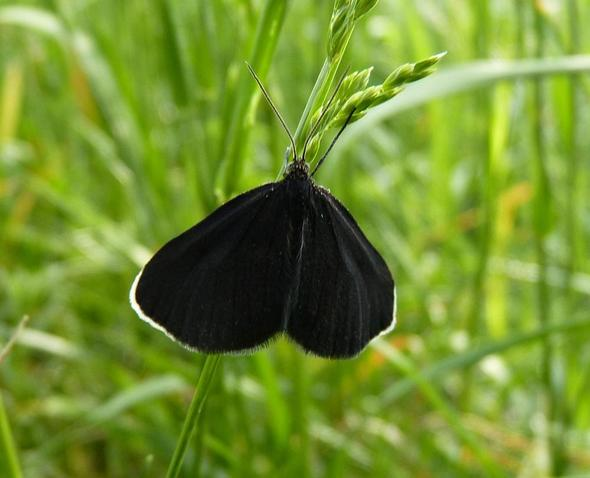 Schmetterling - (Schule, Beruf, Biologie)