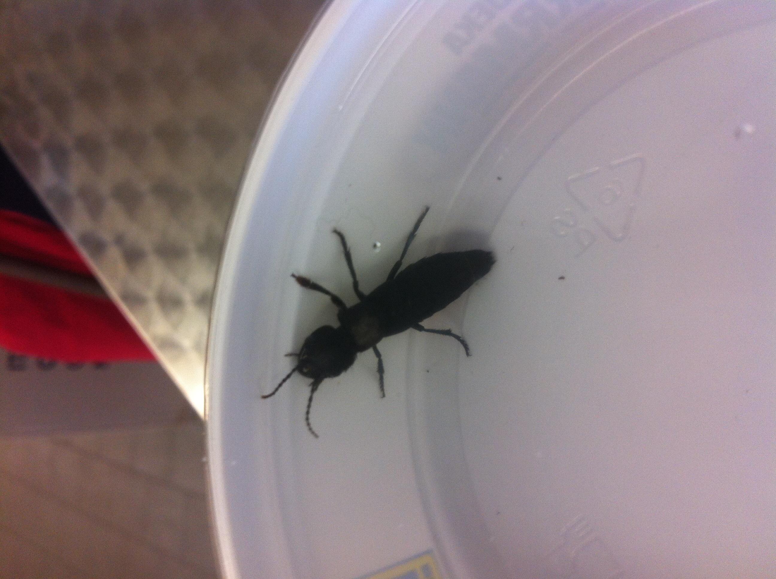 wer kann mir sagen was das f r ein insekt ist natur insekten k fer. Black Bedroom Furniture Sets. Home Design Ideas