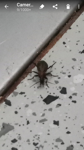 Käfer Bild 1 - (Biologie, Kaefer)