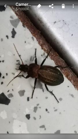 Käfer Bild 2 - (Biologie, Kaefer)