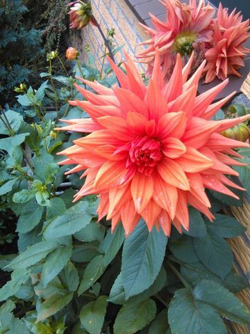 Wer kennt den Namen dieser Blume?