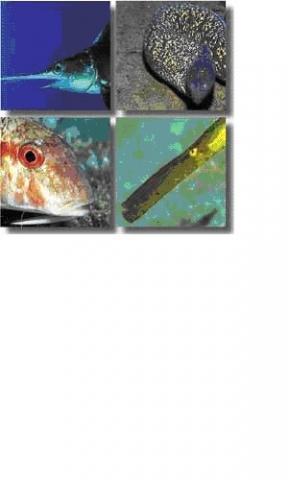 Rechts unten. - (Tiere, Fische, Mittelmeer)