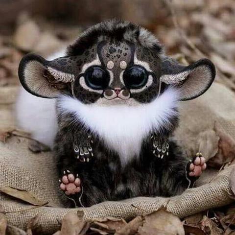 Das ist das kleine Kerlchen^^ - (Tiere, Spezies Tierart )