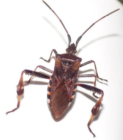 wer kennt den namen von diesem k fer insekten bestimmung. Black Bedroom Furniture Sets. Home Design Ideas