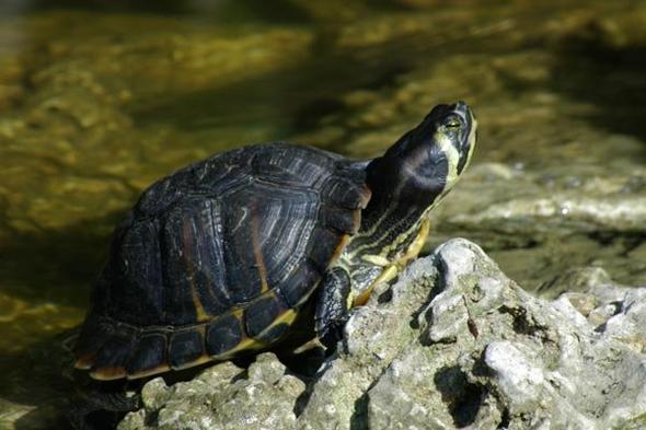 Schildkröte 1 - (Name)