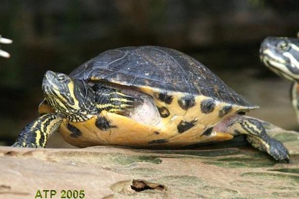 Schildkröte 2 - (Name)