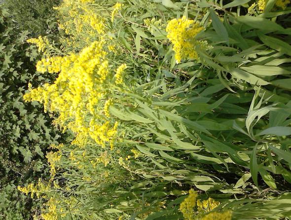 was - (Pflanzen, Unkraut, kausalitaet)