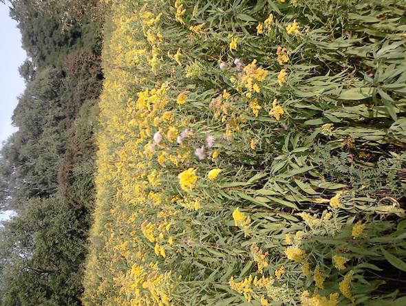 das - (Pflanzen, Unkraut, kausalitaet)
