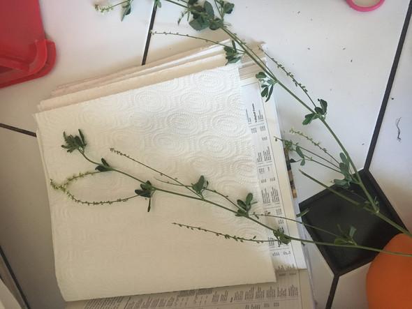 Bild 2 - (Pflanzen, Blumen, weiss)