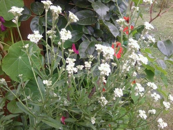 Blume - (Garten, Pflanzen)