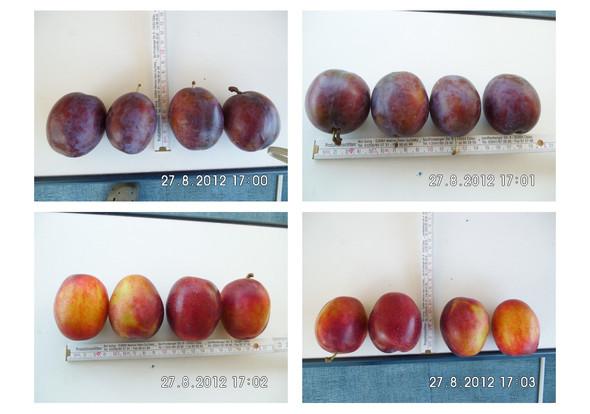Zwei Sorten - (Obst, Pflaumen)