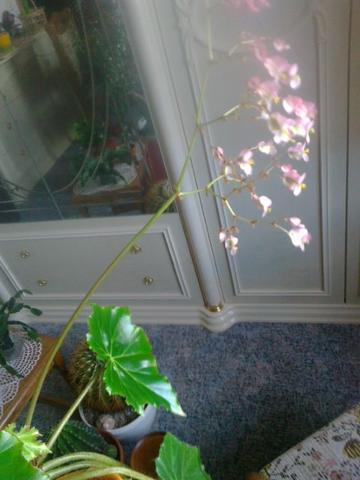 wer kennt diese zimmerpflanze mit den gl nzenden bl ttern. Black Bedroom Furniture Sets. Home Design Ideas
