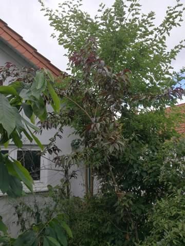 Wer kennt diesen Baum?