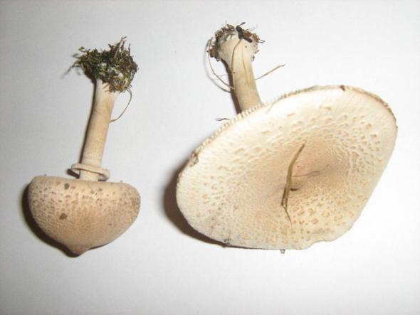 Pilz - (Pilze, waldpilze, Pilzsammler)