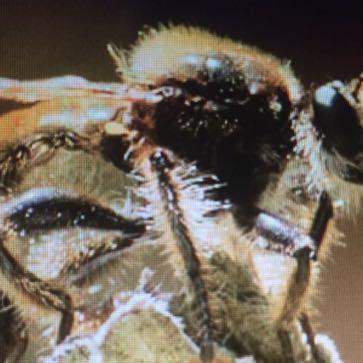 Haariges Insekt - (Film, Serie, Insekten)