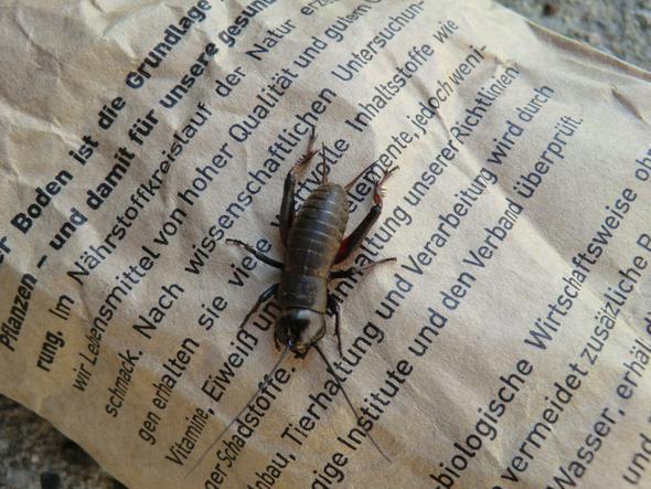 Mir unbekanntes Insekt - (Insekten)