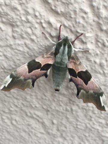 Insekt 2 - (Tiere, Garten, Insekten)
