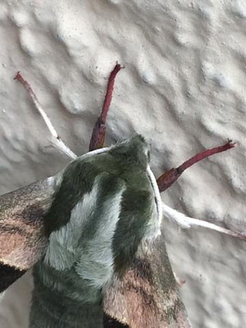 Insekt 3 - (Tiere, Garten, Insekten)
