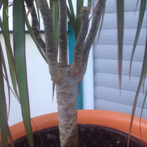 Stamm - (Pflanzen, unbekannt)