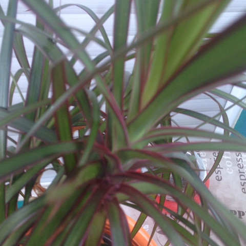 Blätter - (Pflanzen, unbekannt)
