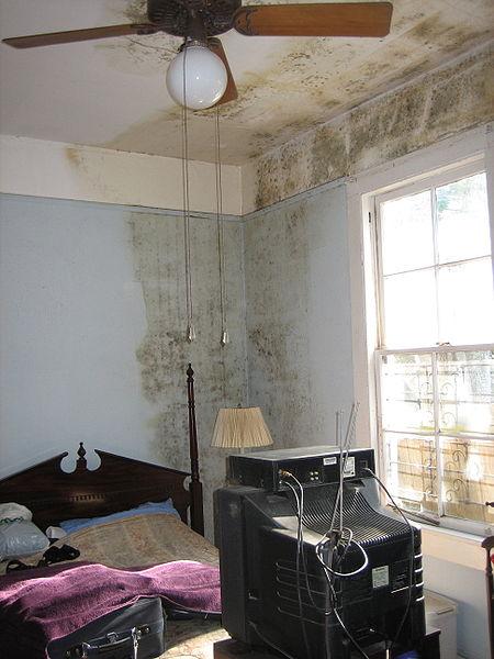 wer kommt f r schimmelschaden auf wohnung versicherung. Black Bedroom Furniture Sets. Home Design Ideas