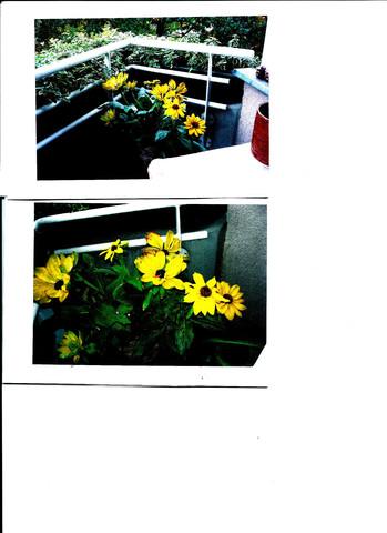 Blumen - (Haus, Garten, Pflanzen)