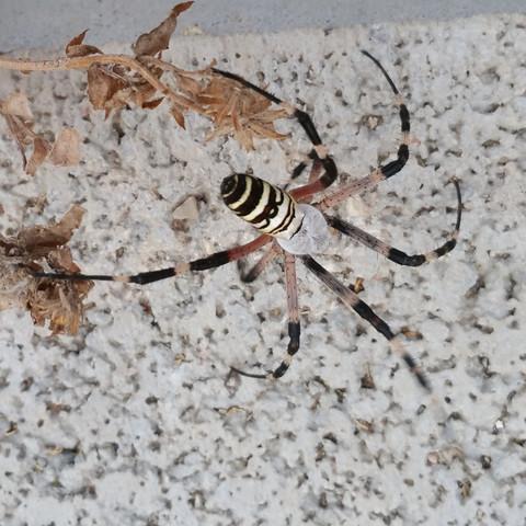 Spinne - (Tiere, Spinnen)
