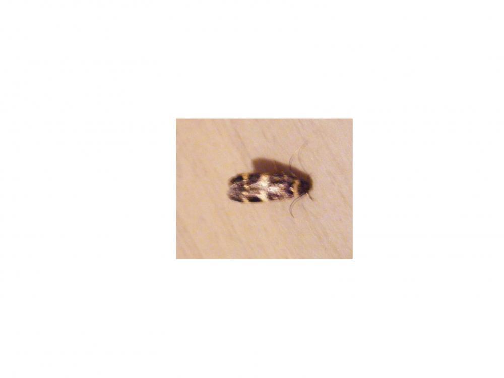 wer wei was das auf den bildern ist insekten motten. Black Bedroom Furniture Sets. Home Design Ideas