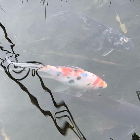 Wer weiß was mein Fisch hat ?