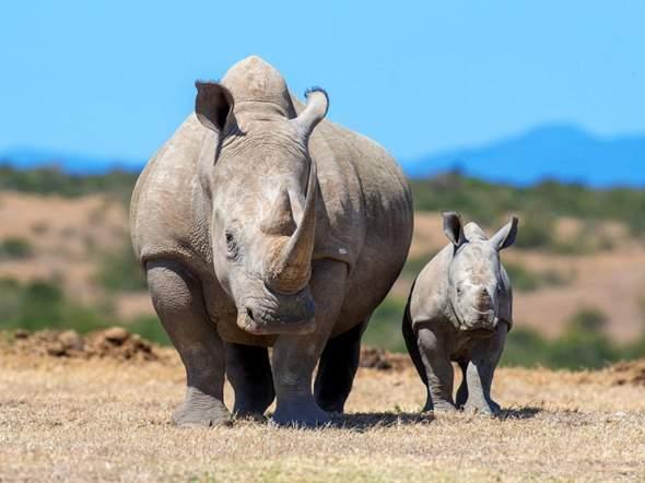 Wer Würde Einen Free For All Kampf Zwischen Diesen Tieren Gewinnen?