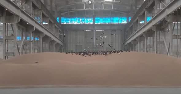 Werden bei uns die Getreidevorräte durch Tauben auch so verunreinigt?
