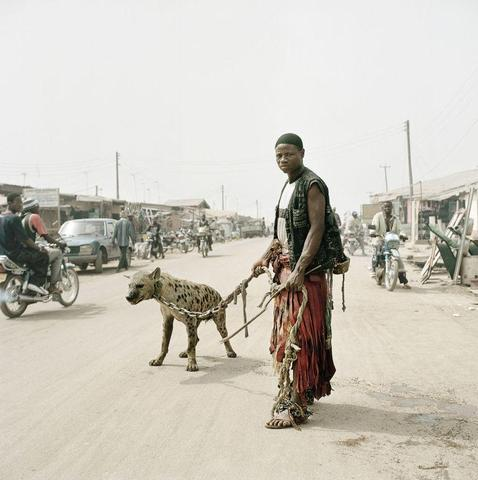 Wachkatze - (Tiere, Menschen, pitbull)