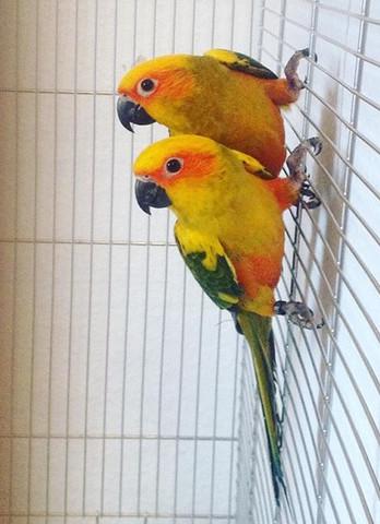 Das sind die Zwei - (Haustiere, Vögel, Nachwuchs)