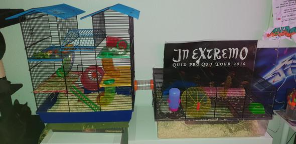 Weshalb nagt mein Hamster am Käfig?