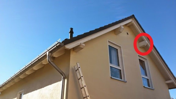 Wespennest Im Dach