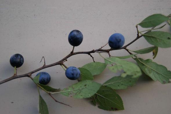 geheimnisvolle Pflanze - (Schule, Biologie, Pflanzen)