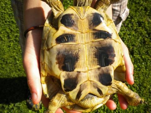 Kleiner Kühlschrank Für Schildkröten : Wie alt ist meine schildkröte tiere haustiere schildkröten