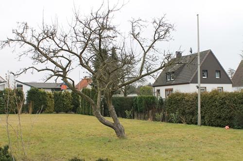 Baum - (Alter, Baum)