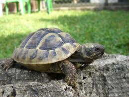Schildkröte - (Freizeit, Tiere, Alter)