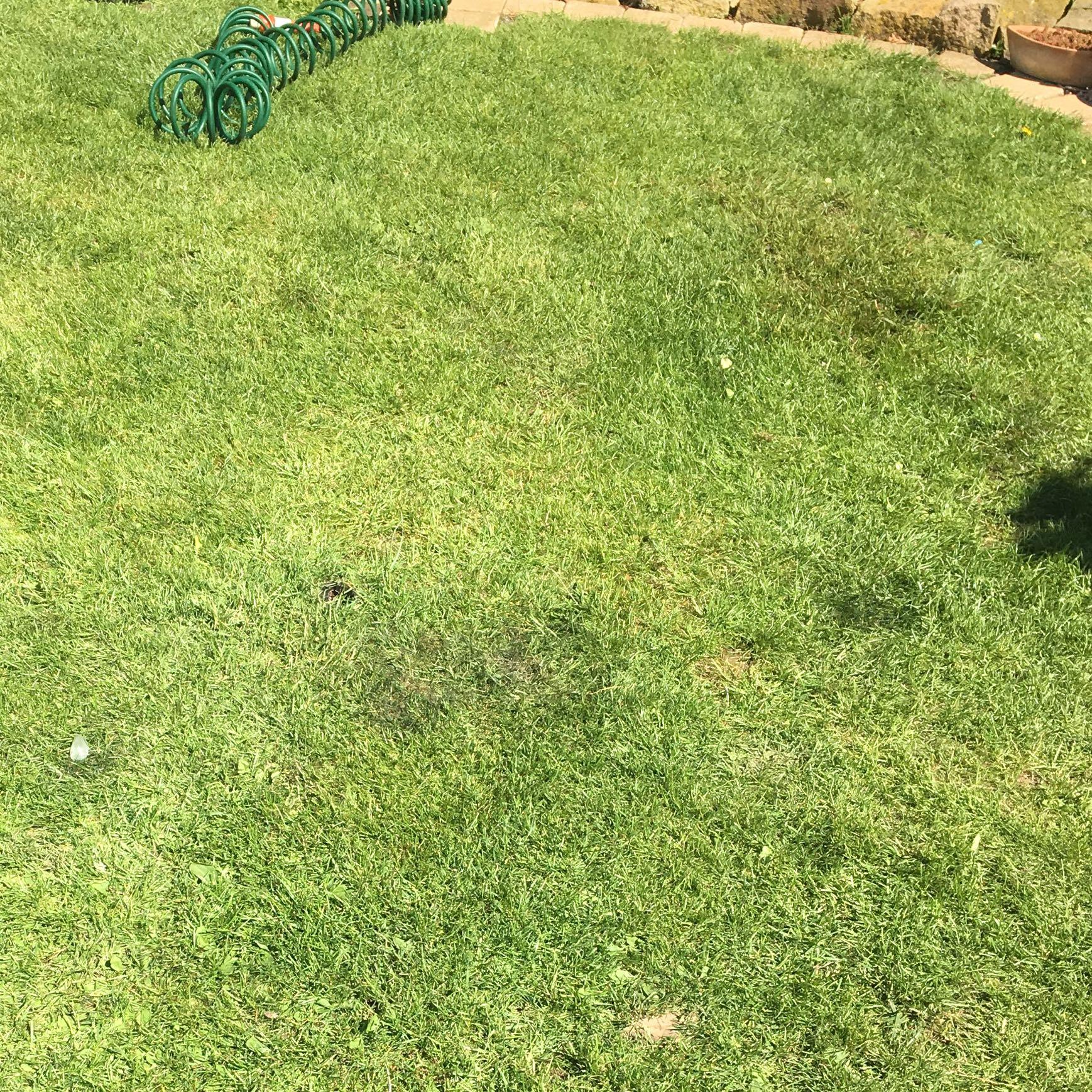 Wie Bekomme Ich Einen Schönen Rasen