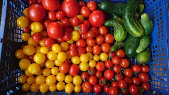 Wie Pflanze Ich Tomaten
