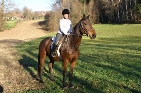 wie bekomme ich mein pferd mehr gel ndersicher reiten ausreiten pferde. Black Bedroom Furniture Sets. Home Design Ideas