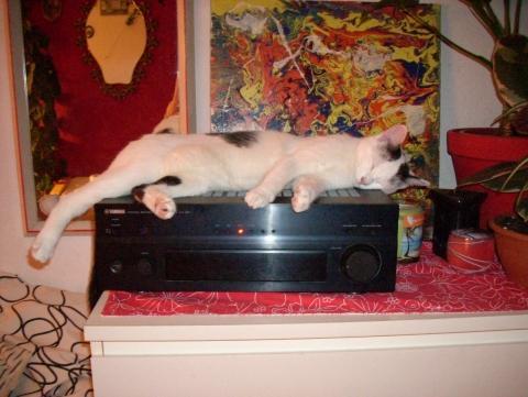 - (Katzen, schlafen, vertreiben)