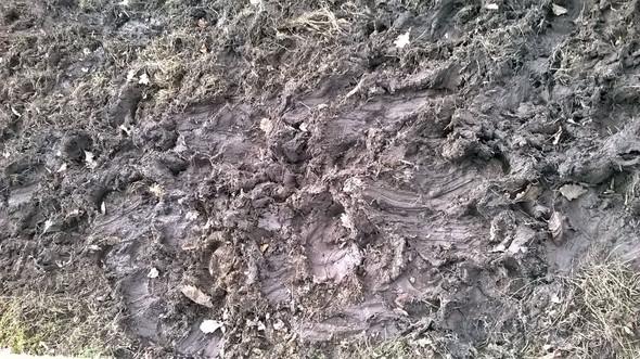 deutliche Haflinger-Spuren - (Pferde, Pony, wiese)