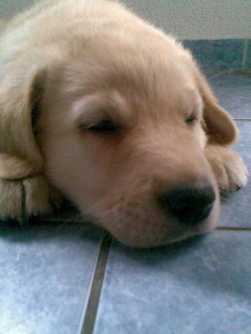 Sein Name ist Benny - (Hundeerziehung, Tierfragen)