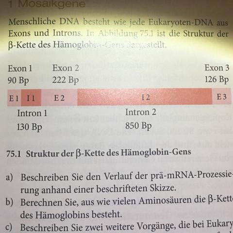 Die a) habe ich bereits gelöst  - (Schule, Biologie, lk)