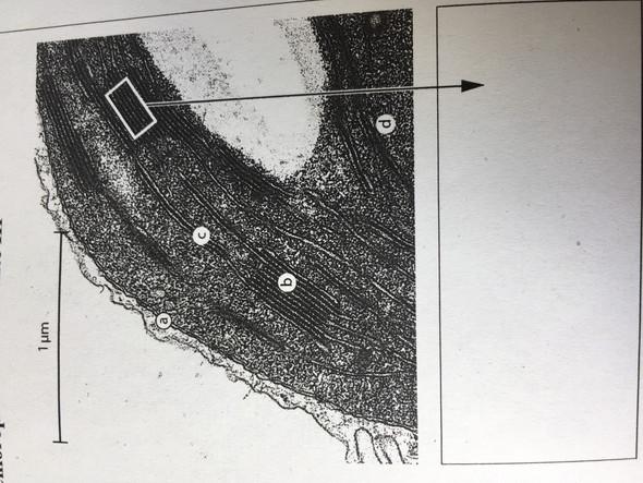 Wie berechne ich die Vergrößerung dieses Bildes?