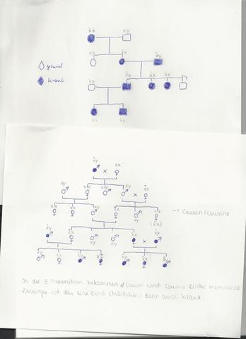 Stammbaumtafel - (Genetik, Genotypen, Interpretation von Stammbaumtafeln)
